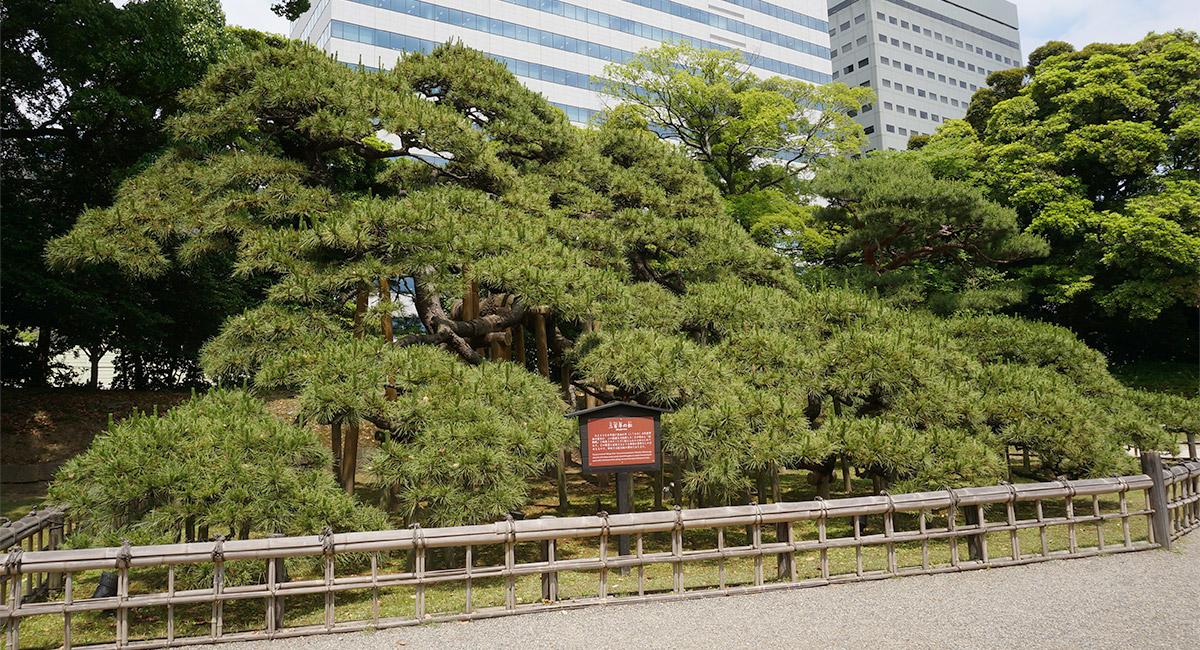 浜離宮恩賜庭園「三百年の松」