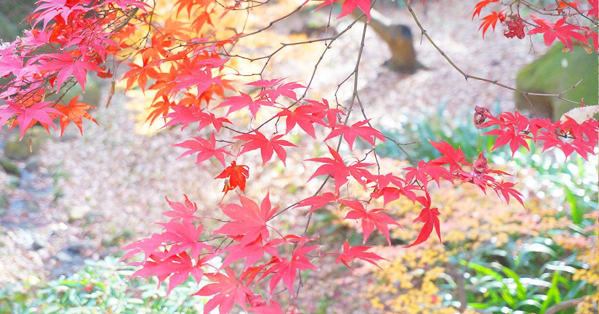 横浜三渓園の紅葉
