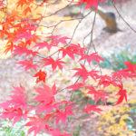 【横浜】紅葉散歩♪「横浜 三渓園」